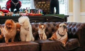 Готель для тварин: життя «vip з хвостиком»