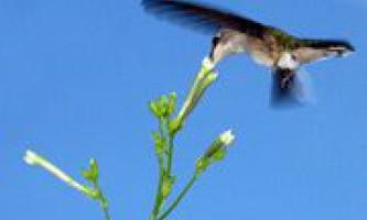 Відкрито незвичайний спосіб боротьби рослин з гусеницями