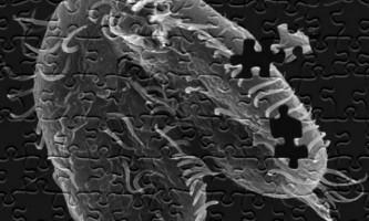 Відкрито одноклітинне, що руйнує і повністю перебудовувати свій геном