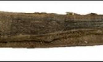 Відкладення вушного воску у синіх китів, що нагадують річні кільця дерев