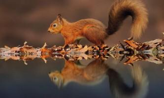 Відображення тварин у воді: хто на світі всіх красивіше?