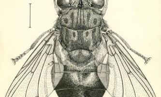 Ґедзі - комахи паразити