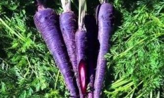 Різнокольорові овочі