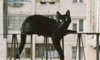 Падіння кішок з висоти