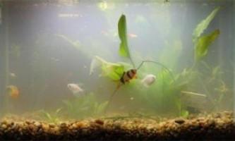 Пахне вода в акваріумі