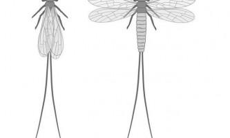 Палеодіктіоптери - доісторичні комахи