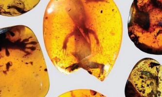Палеонтологи знайшли в бурштині найдавнішого хамелеона