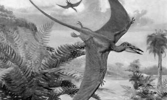 Палеонтологи виявили міні-птерозавра