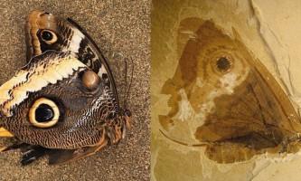Палеонтологи виявили останки стародавнього комахи - двійника сучасної метелики