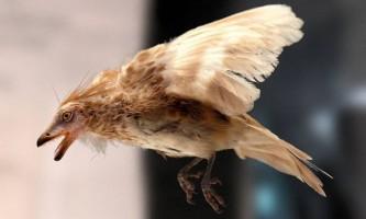 Палеонтологи зрозуміли, чому птахи пережили динозаврів