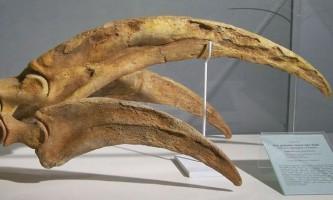 Палеонтологи посперечалися, у якої тварини найдовші кігті