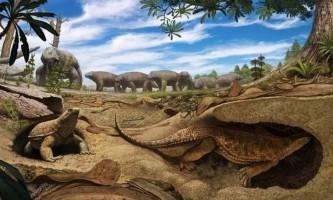 Палеонтологи розповіли, як черепахи обзавелися панцирами