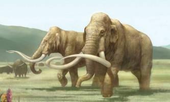 Палеонтологи вирішують загадку черепа мамонта, знайденого в каліфорнії
