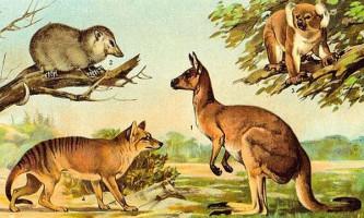 Палеонтологи дізналися про спільну долю динозаврів і ссавців