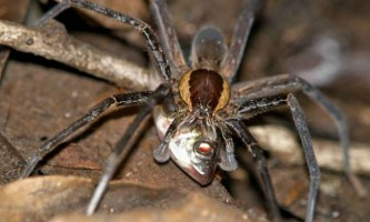 Палеонтологи викопали найбільшого стародавнього павука
