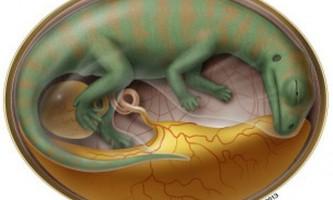 Палеонтологи заглянули всередину яйця динозавра