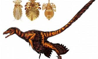 Палеонтологи запідозрили динозаврів у вошивості