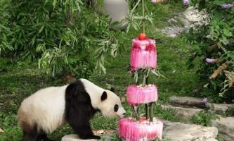 Панда святкує свій день народження