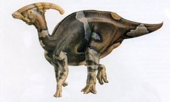 Паразауролофуси