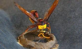 Паразити можуть позбавляти соціальних комах касти