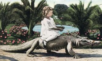 Парк ручних алігаторів в каліфорнії, сша