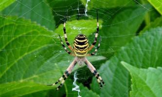 Павуки ловлять комах на ультрафіолетову приманку
