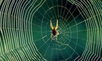 Павуки підлаштовують павутину під певних жертв