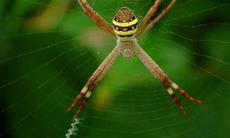 Павуки прикрашають павутину, щоб її рвали великі тварини