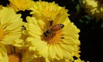 Бджоли краще навчаються вранці