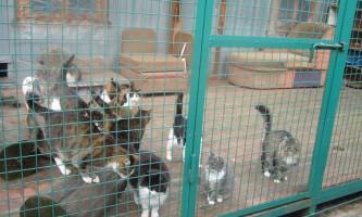 Пермська пенсіонерка заповіла всі свої заощадження кішкам