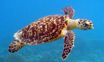 Перша в світі світиться рептилія виявлена поблизу соломонових островів