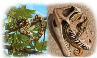 Перші змії повзали по землі на 70 мільйонів років раніше