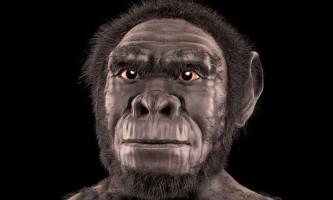 Першим вихідцем з африки був людина уміла