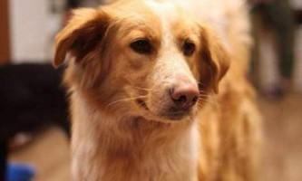 Пес з трамвая №13 шукає сім`ю