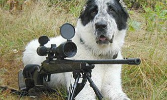 Пес підстрелив невдалого мисливця прямо в м`яке місце