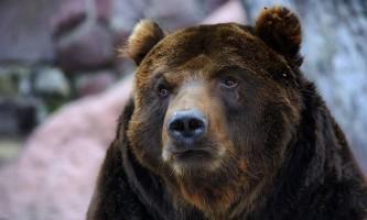 Пісня «про зайців» допомогла мурманських туристам прогнати ведмедя
