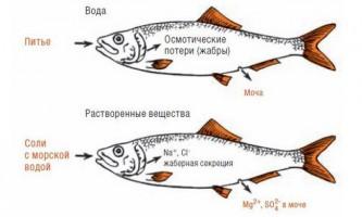 Чи п`є риба воду або чому вода в морі солона, а риби в ній несолоним?