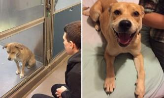 Собаки з притулку: до і після набуття сім`ї