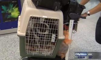 Пілот лайнера перервав трансатлантичний рейс заради порятунку собаки
