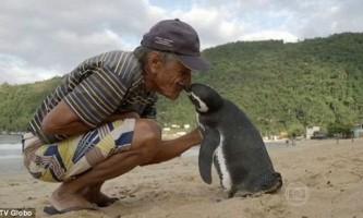 Пінгвін щорічно пропливає 5 тисяч кілометрів, щоб зустрітися зі врятували його людиною