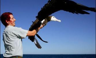 """Пінгвіни, альбатроси і морські леви стали """"співавторами"""" атласу моря"""