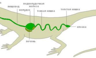 Травна система плазунів