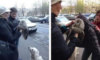 Пітерські перехожі врятували сову від ворон