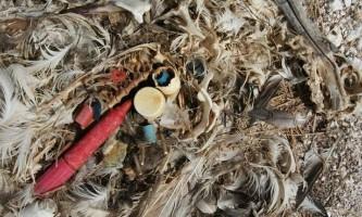 Пластикові відходи здаються морські птахи привабливою їжею