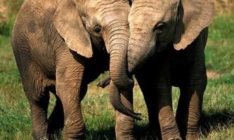 Стадо п`яних слонів знесло індійську село