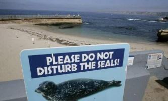 Пляж тюленів в каліфорнії