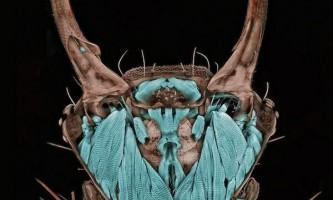 Переможці конкурсу наукової мікрофотографії nikon international small world