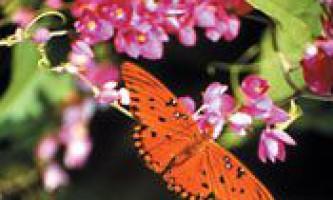 Чому метелики пурхають?