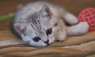 Чому кішка відмовляється від кошенят після пологів