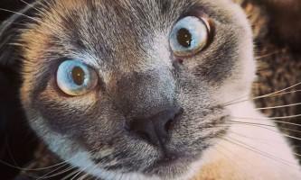 Чому кішки і коти часто байдужі до своїх господарів